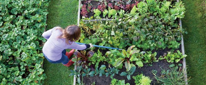 Garden Tips For Beginners