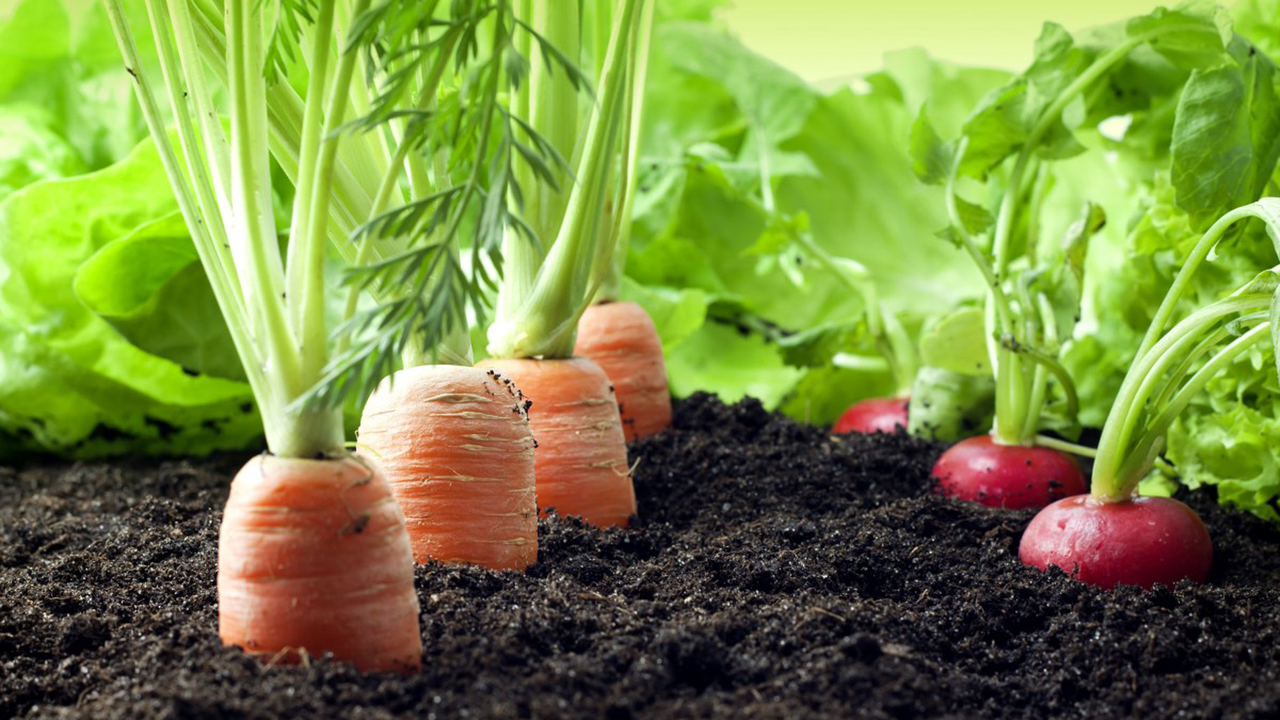 The Organic Farming Trend Is Catching One Are You With It?